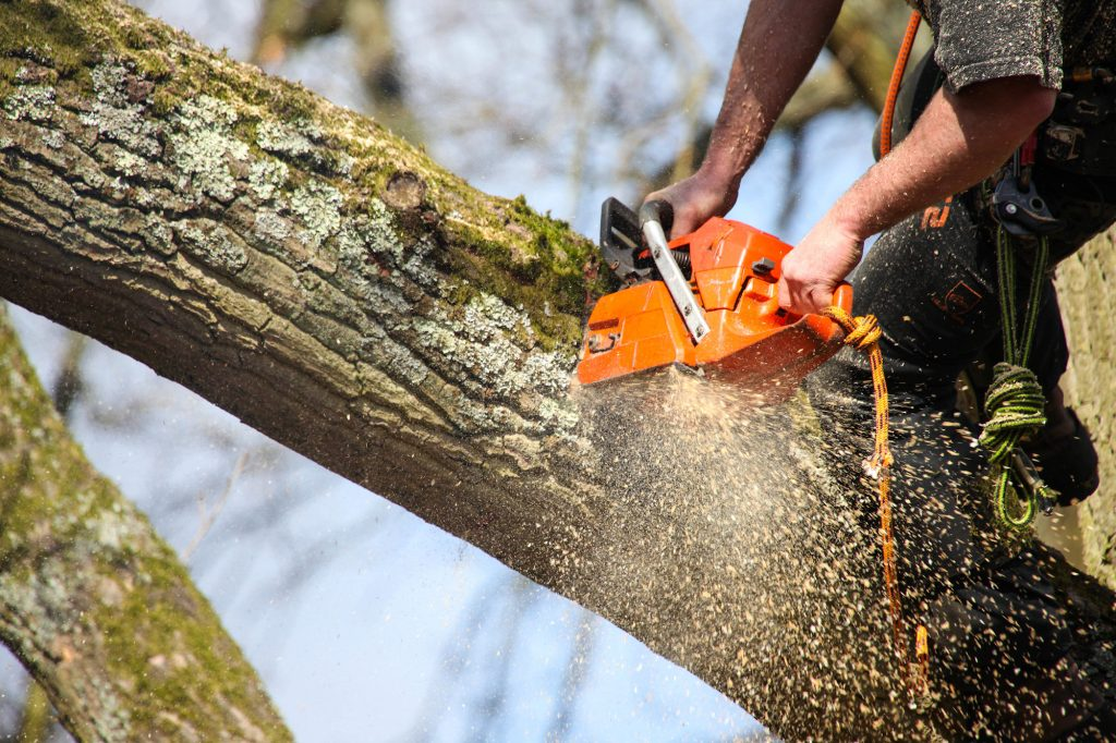 Get capable tree trimming service to offer your yard elegant interest
